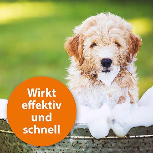 ARDAP Anti Floh Shampoo für Hunde 250ml - 4