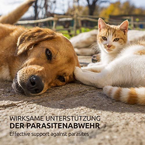 AniForte Milben Stop Spray 100 ml – versch. Größen – Naturprodukt für Hunde, Katzen & Pferde - 6