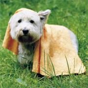 Hundehandtuch, 50 X 70cm